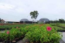 Bangka Botanical Garden (BBG)